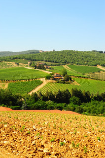 Hill Of Toscana With Vineyard In The Chianti Region