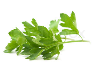 celery leaves on a white background
