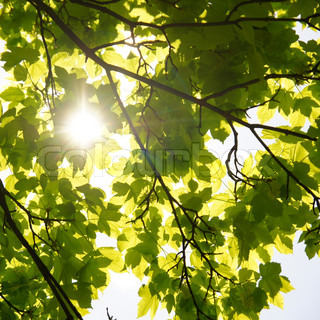 Spring sun through the leaves of trees