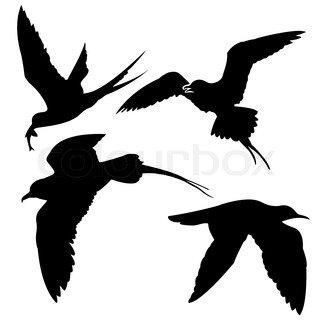 silhouette of the sea birds on white background
