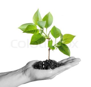 Grøn plante i den menneskelige hånd