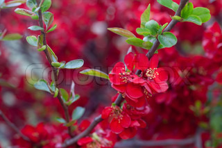 red flowers on a tree branch