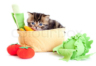 kitten pure breed striped british with toy vegetables isolated