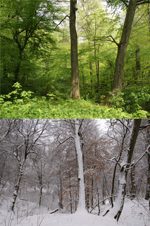 Trees in different seasons - winter and  spring