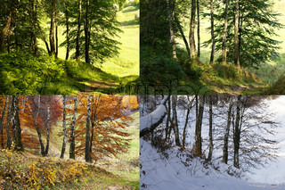 Four seasons - spring, summer, autumn, winter