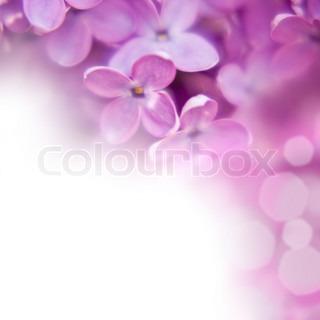 Billede af 'hvid, sløret, blomster'