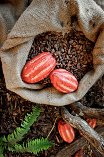 Cocoa Beans and Cocoa Fruits in a jute bag
