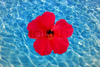 Sunlight reflecting on a the bottom of a shallow underwater bay and hibiscus flower.