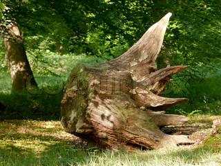 Hjemstedsfordrevne gamle og rådne træstub med mos og svampe vokser på det