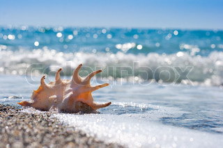 seashell in surf and sand of seashore
