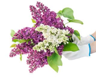 I hænderne på landmanden den store buket af en lilla og hvid lilla blomster.