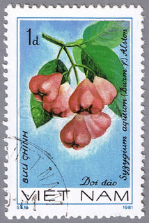 VIETNAM - CIRCA 1981: A stamp printed in Vietnam shows Syzygium aqueum, series devoted to fruits, circa 1981
