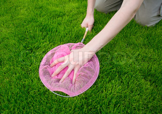 Hand with a butterfly net catching butterflies in the grass