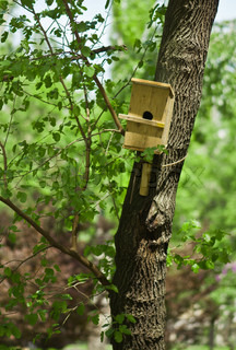 wooden birds house on a tree in an spring forest