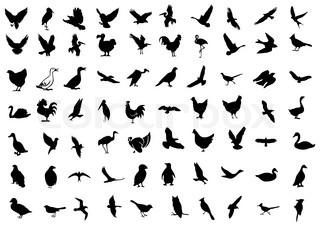 fugl symbol.