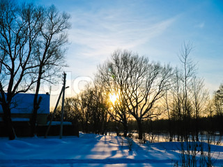 beautiful winter sunset with trees silhouette
