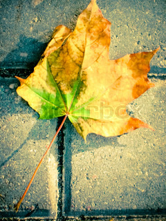 Fallen leaf on an sidewalk in the city.