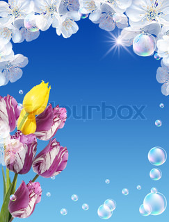 Tulips, white flowers, bubbles  and  sunshine