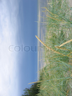 Image of 'beach, grass, the'