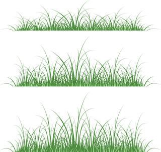 græs silhuet på grøn og blå baggrund