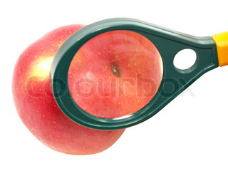 Worm-eaten apple under magnifying glass on white background.