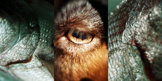 ©Michel Leynaud/AltoPress/Maxppp ; Triptych, dog's eye, close-up, between images of reptile skin, extreme close-up