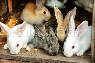 Hase-Kaninchen-Familie