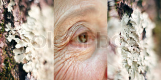 ©Michel Leynaud/AltoPress/Maxppp ; Triptych, elderly woman's eye, close-up, between images of lichen, extreme close-up
