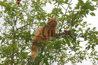 Foxy-red cat sitting on the tree with green leaves