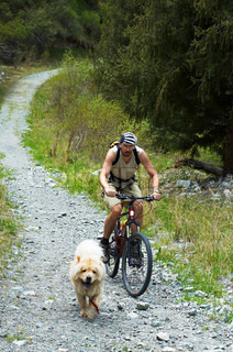 Mountain biker and dog on old rural road in spring mountain