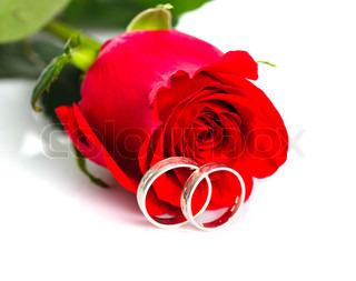 Rote Rose mit silbernen Ringen auf weißem Hintergrund.