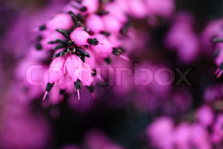 Romantic background with purple flowers. Bokeh with shallow DOF.