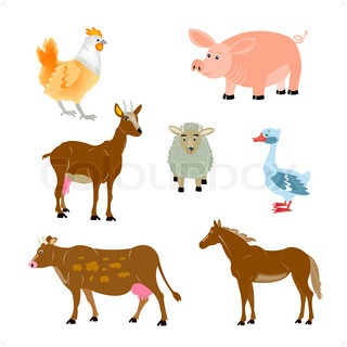 Home animals on white background