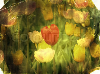 Vintage paper textures old photo postcard. Spring tulips.