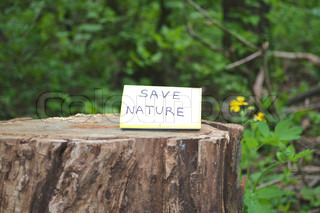 Save the nature of the appeal on the stump cut tree