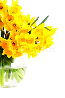 Bouquet of yellow daffodils in a glass vase isolated on white background.