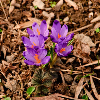 Different first spring flowers grow up in soil close up in national park. Shallow DOF