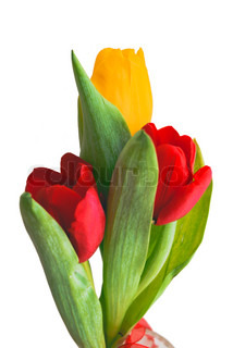 Three beautiful bright tulips at white background