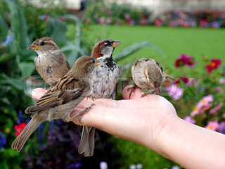 Birds eating out of a woman's hand, colourfull image.