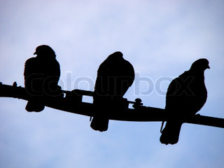 Three pigeons on a wire, silhouette type image.