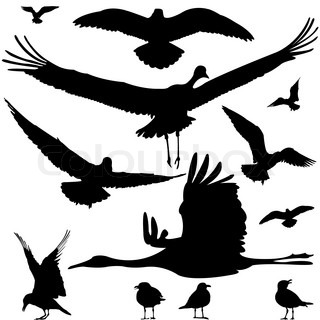 birds silhouettes isolated on white, abstract vector art illustration