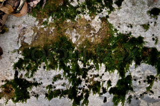 Texture of an old concrete wall with a moss