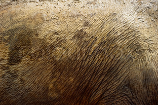 Elephant skin close-up in day light