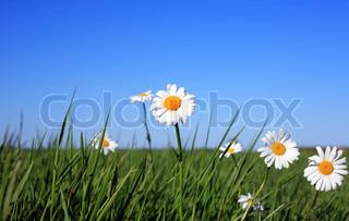 Billede af 'solskin, landskaber, sommer'