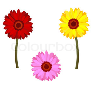 Set of realistic daisy flowers (red, pink and yellow)