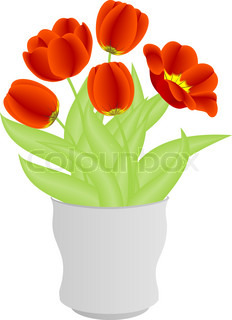 Red tulips in white vase on white background