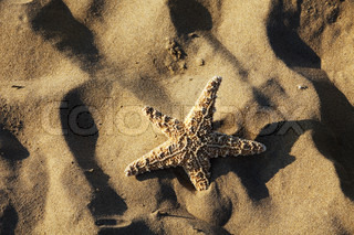 Is a starfish on a sandy beach next to the sea. Beautiful memories of the last holiday.