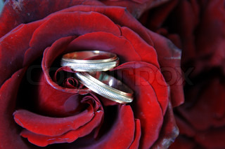Couple of Wedding Rings in Red Rose Bud