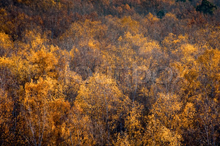 yellow autumn forest top view