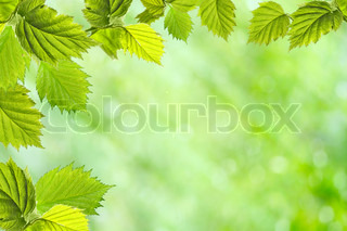 green leaves on the summer background